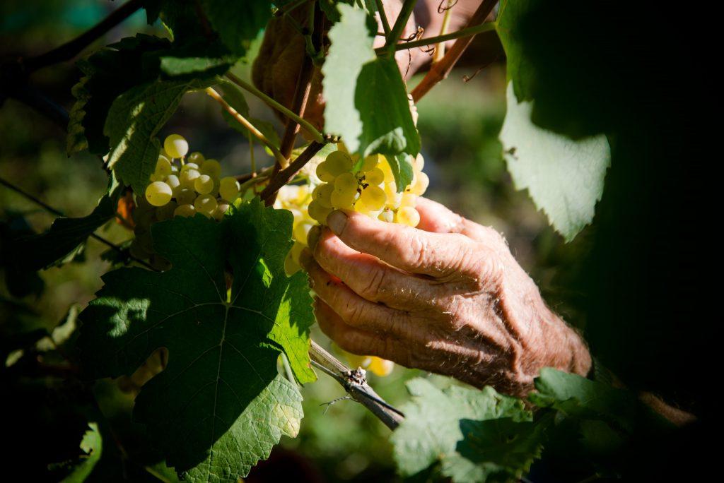 Pinot Bianco San Michele Appiano